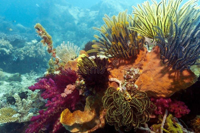 Download Recife coral indonésio foto de stock. Imagem de fotografia - 16852606