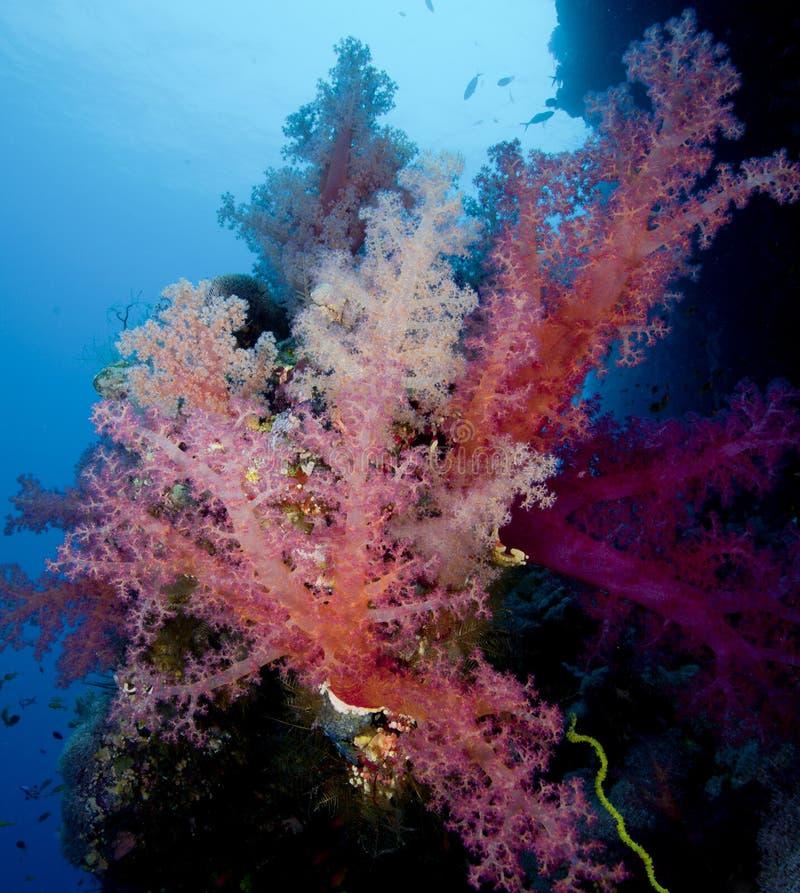 Recife coral no Mar Vermelho imagens de stock