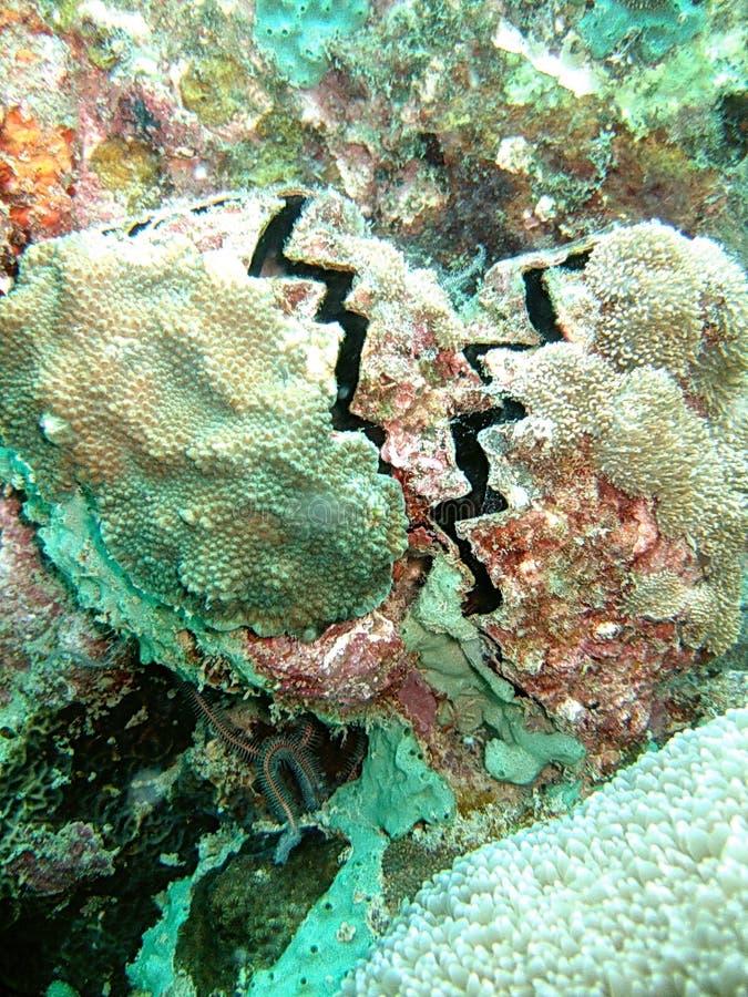 Recife coral subaquático foto de stock royalty free