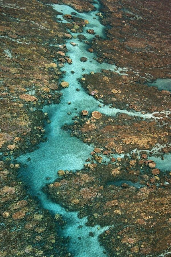 Recife coral tropical. imagem de stock