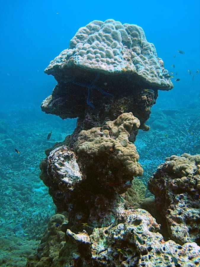 Recife coral tropical foto de stock