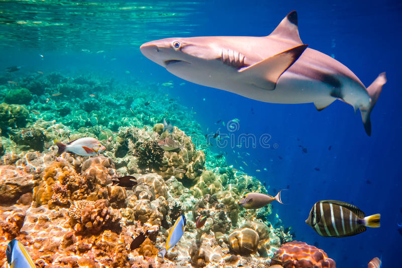 Recife coral tropical imagem de stock