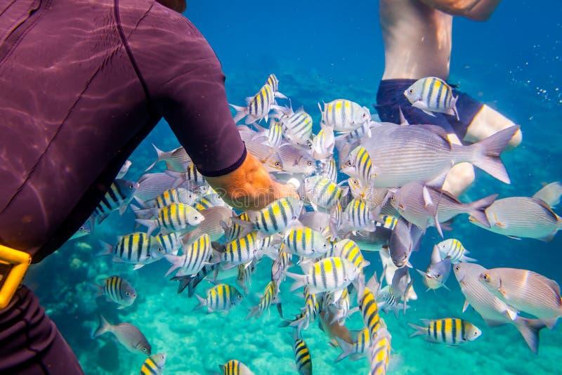 Recife coral tropical O homem alimenta os peixes tropicais imagens de stock