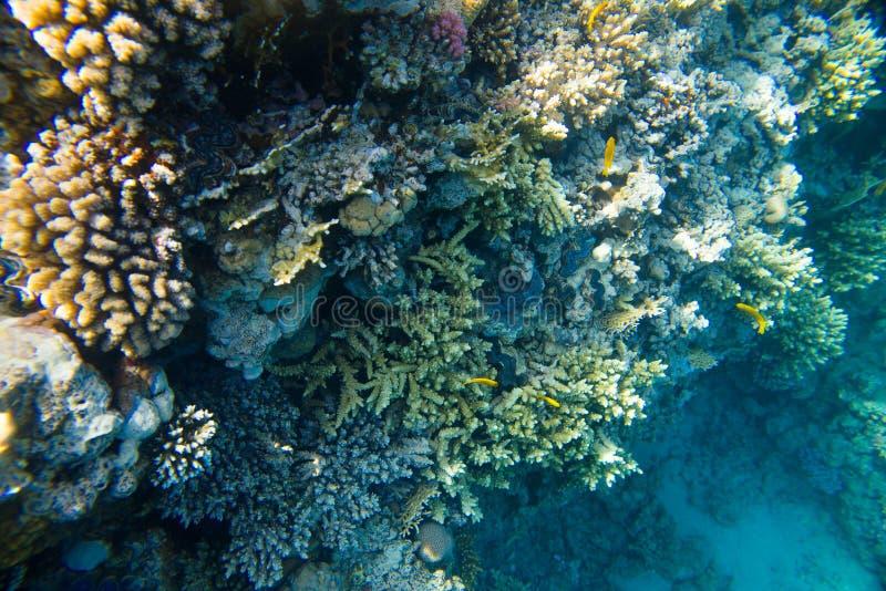 Recife de corais bonito e diverso com os peixes do Mar Vermelho imagens de stock royalty free