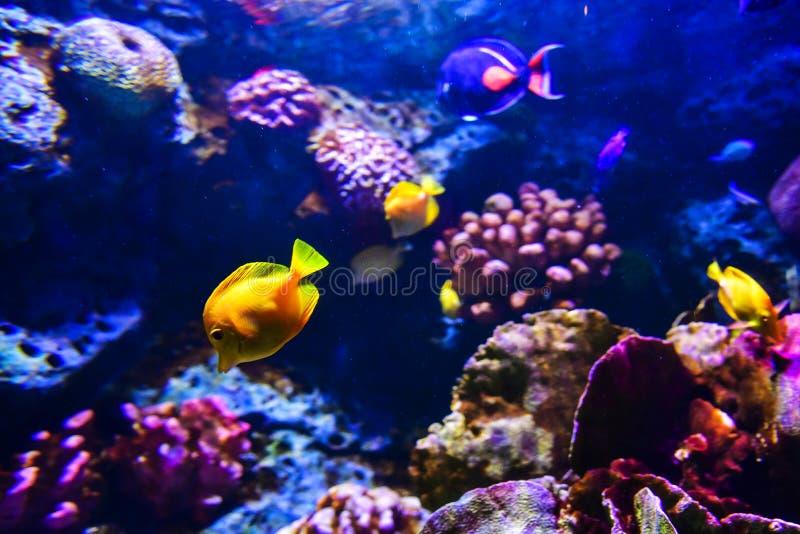 Recife de corais colorido com muitos peixes no tanque do aquário imagem de stock royalty free