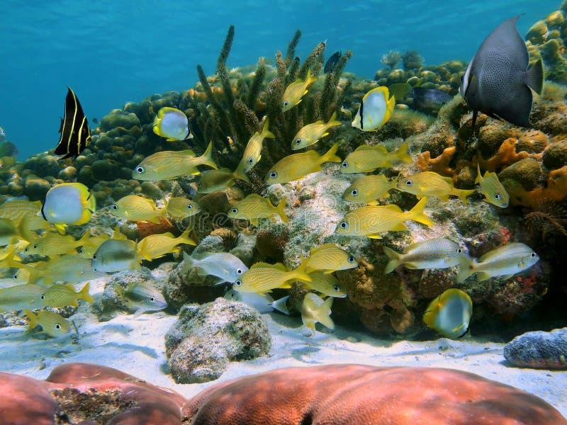 Escola de peixes tropicais em um recife de corais fotos de stock royalty free