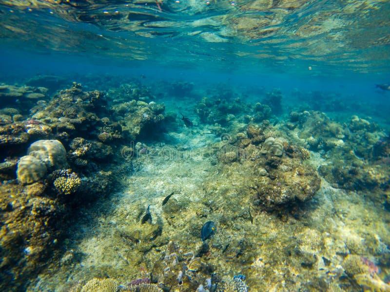 Recife de corais com corais macios e duros com os anthias exóticos dos peixes imagem de stock