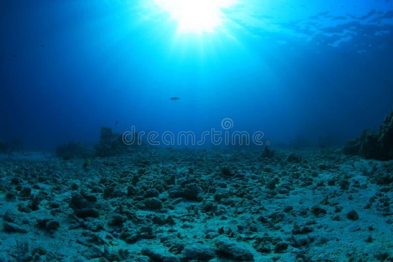 Recife de corais danificado fotografia de stock royalty free