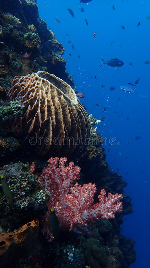 Recife de corais, destruição bali Indonésia da liberdade imagens de stock