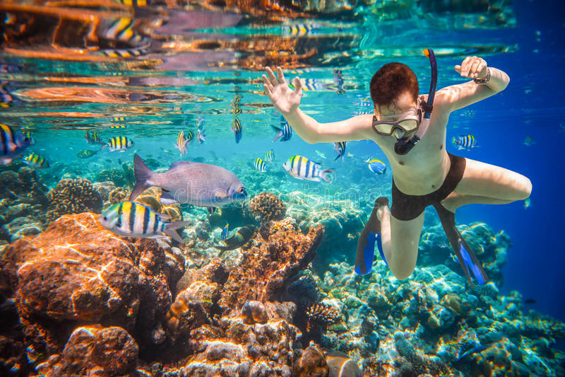 Recife de corais do Oceano Índico de Snorkeler Maldivas fotos de stock royalty free