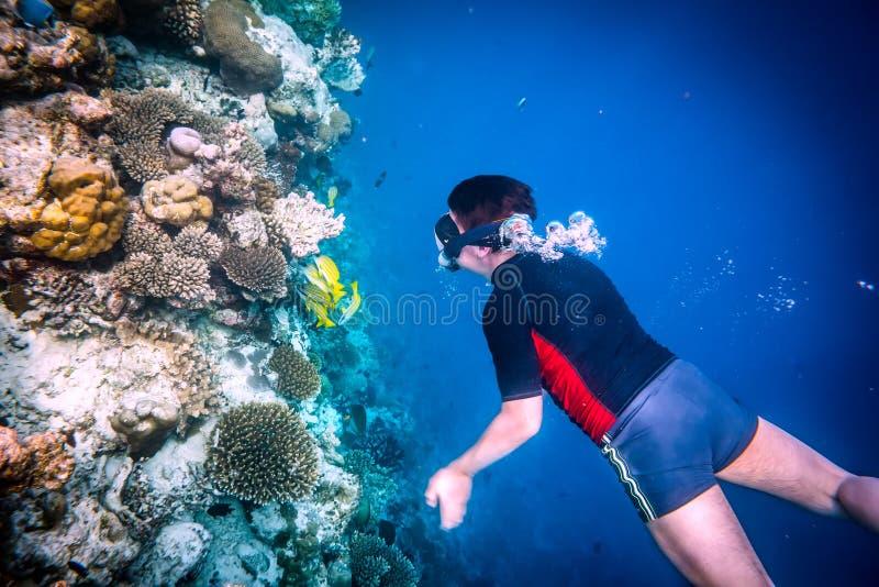 Recife de corais do Oceano Índico de Snorkeler Maldivas imagem de stock