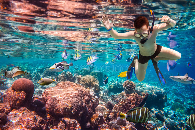 Recife de corais do Oceano Índico de Snorkeler Maldivas fotografia de stock royalty free