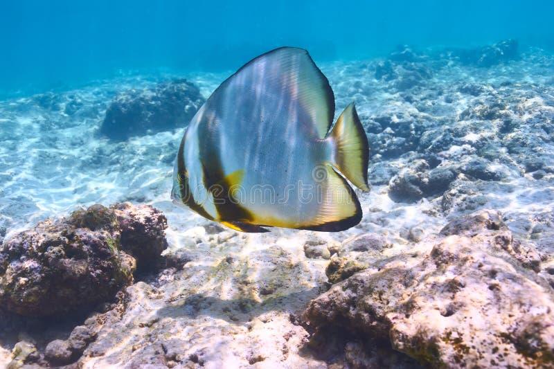 Recife de corais e peixes fotografia de stock