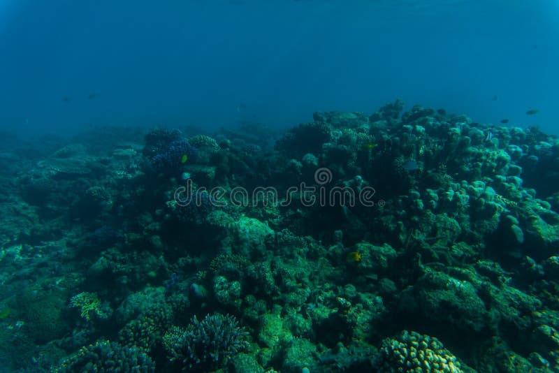 Recife de corais e peixes tropicais, vida marinha Mar ou oceano subaquático fotografia de stock royalty free