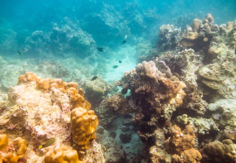 Recife de corais e vida marinha com poluição do problema foto de stock