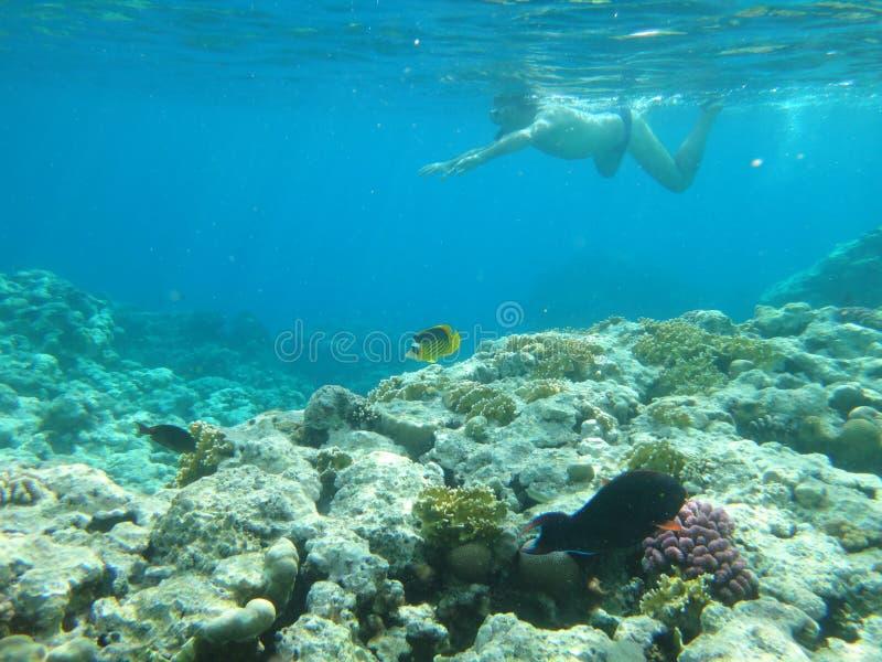 Recife de corais em Egito 4 imagem de stock royalty free