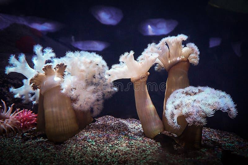 Recife de corais em japão imagens de stock