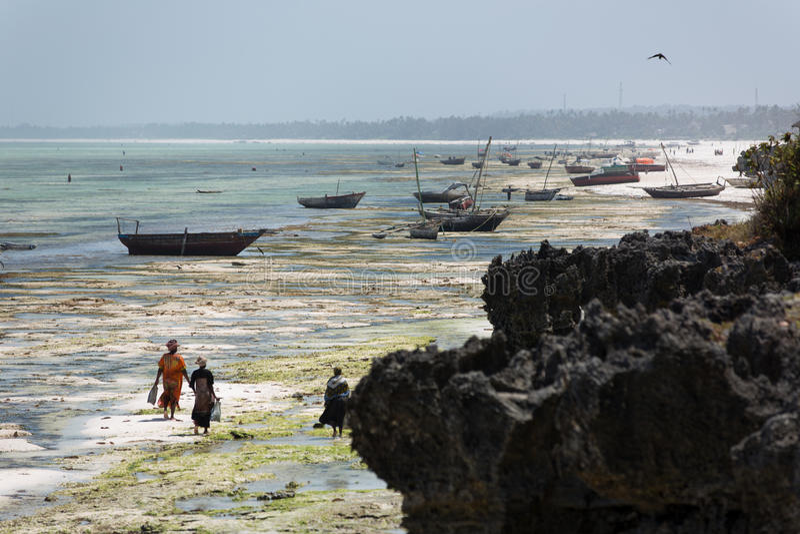 Recife de corais natural em Zanzibar fotos de stock royalty free