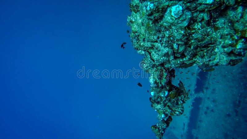 Recife de corais perto de uma destruição no oceano imagens de stock