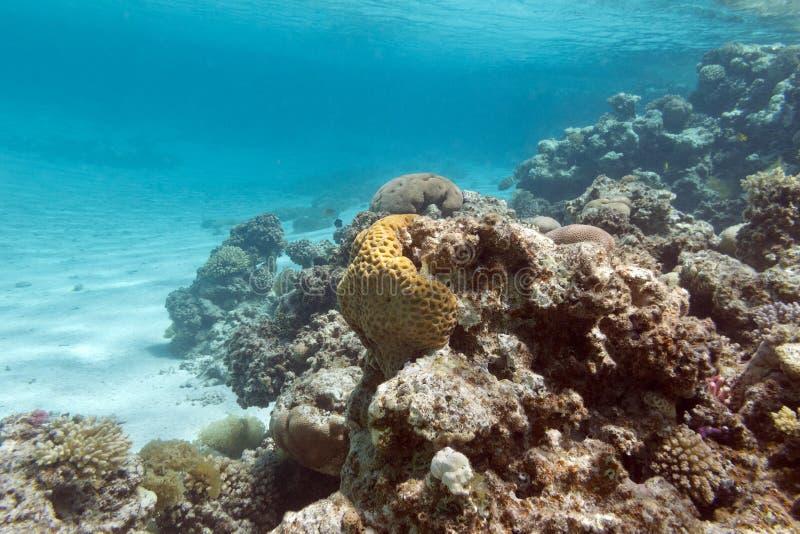 Recife de corais sob a superfície da água no mar tropical, underwa imagem de stock