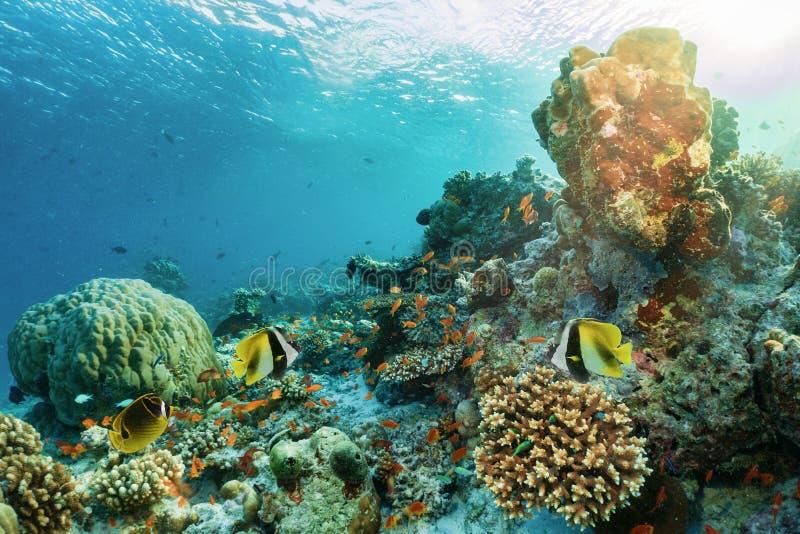 Recife de corais subaquático colorido com peixes tropicais fotografia de stock