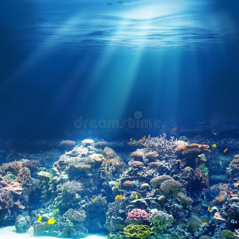 Recife de corais subaquático do mar ou do oceano que mergulha ou que mergulha fotografia de stock royalty free