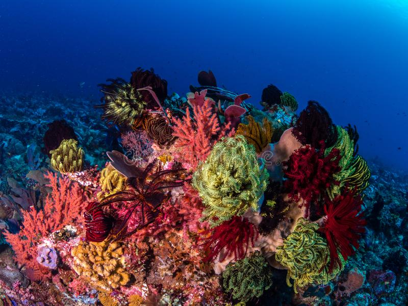 Recife de corais tropical impressionante imagens de stock