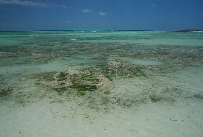 Recife de Zanzibar foto de stock royalty free