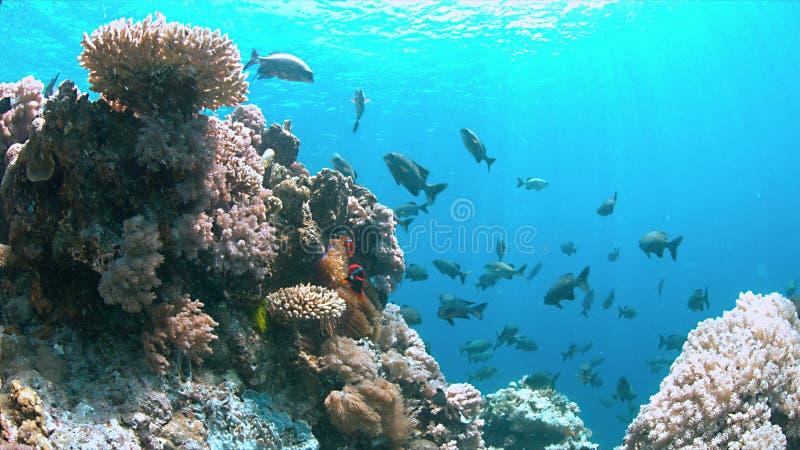 Recife do Apo, recife de corais em Filipinas foto de stock