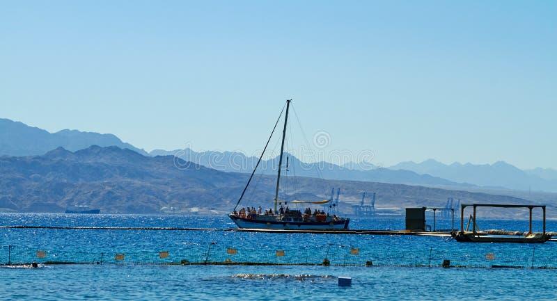 Recife do golfinho no Mar Vermelho fotos de stock royalty free