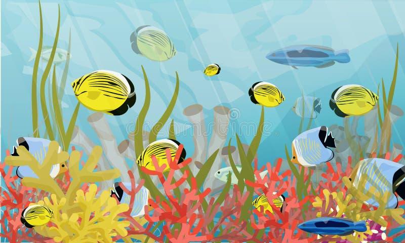Recife grande Corais, algas e uma variedade de peixes tropicais ilustração stock
