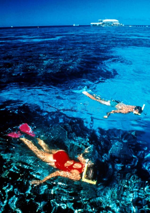 Recife que snorkeling foto de stock royalty free