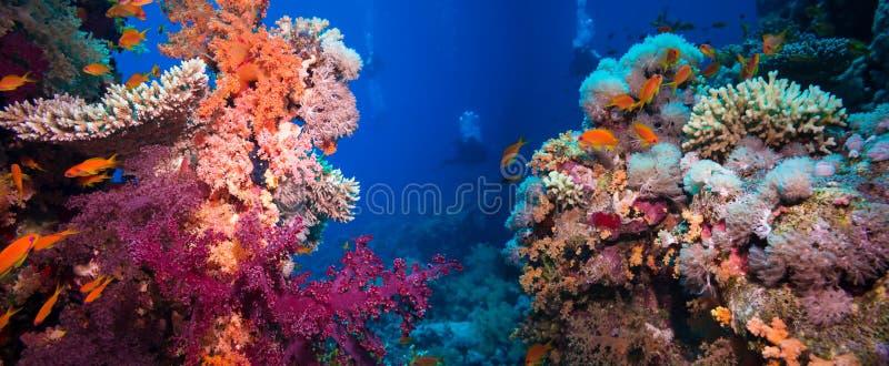 Recife subaquático colorido com coral e esponjas imagens de stock
