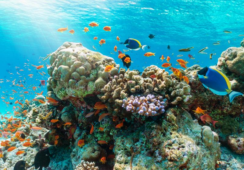 Recife subaquático colorido com os peixes tropicais no Oceano Índico fotos de stock royalty free