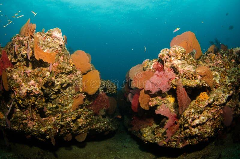 Recifes de corais do mar do cortez, México foto de stock