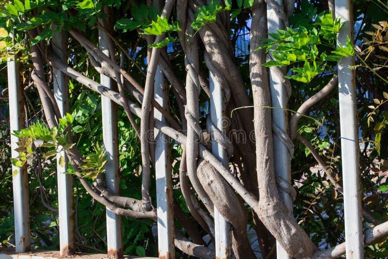 Recinto dai tronchi di albero fotografie stock libere da diritti