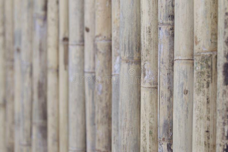 Recinto dai tronchi di bambù fotografia stock libera da diritti