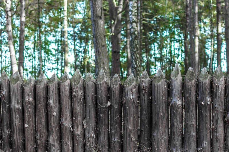 Recinto dei tronchi di albero fotografia stock