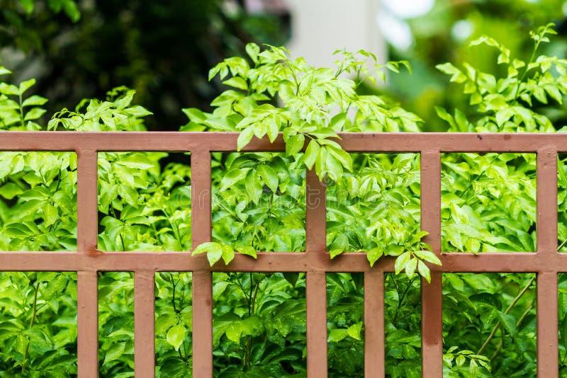 Recinto del ferro e una foglia verde fotografia stock libera da diritti