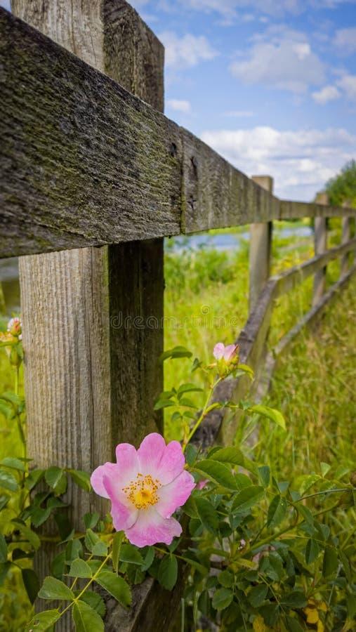 Recinto di legno con il fiore selvaggio - campagna inglese fotografia stock libera da diritti
