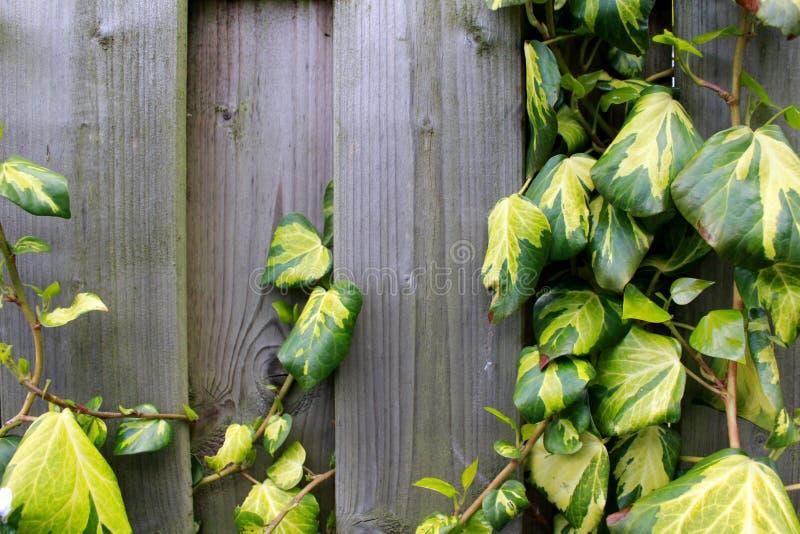 Recinto di legno con una pianta fotografia stock libera da diritti