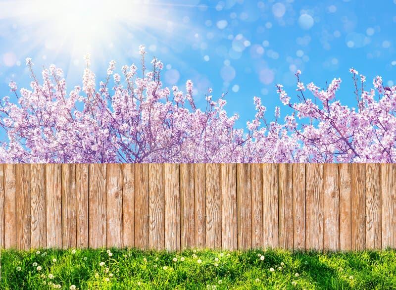 Recinto di legno del giardino al cortile ed albero di fioritura in primavera fotografia stock libera da diritti