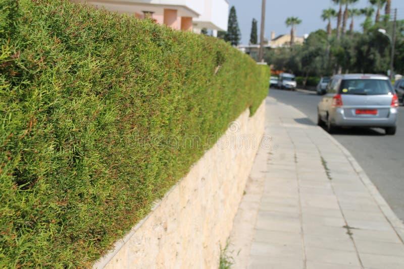 Recinto lungo verde con un bordo piano nel Cipro fotografia stock