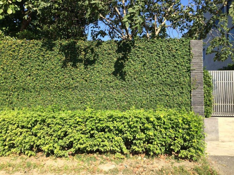 Recinto naturale delle foglie verdi fotografia stock
