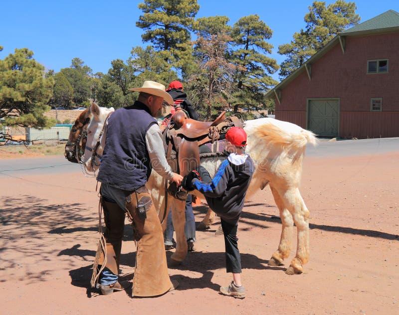 Recinto per bestiame del mulo al Grand Canyon: L'avventura comincia fotografie stock libere da diritti