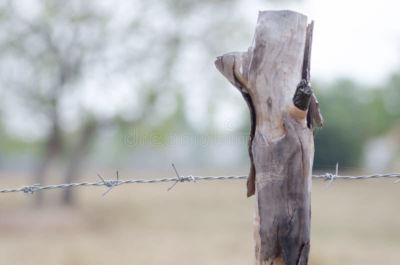 Recinto pungente allungato con gli alberi intorno al morni di sabato dell'azienda agricola immagine stock