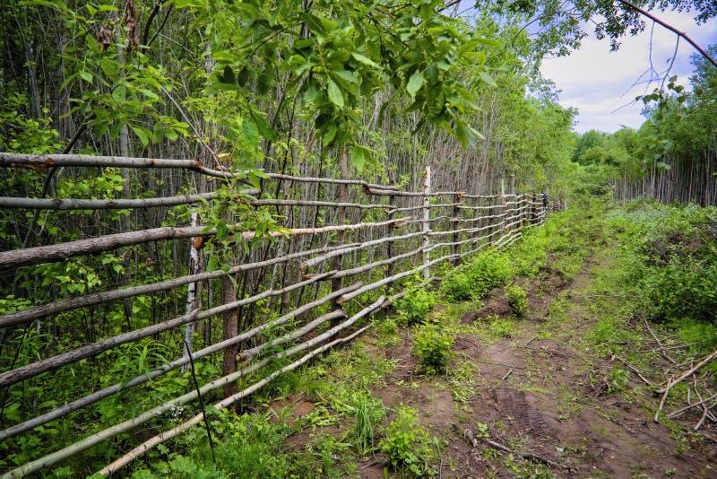 Recinto rurale dei tronchi di giovani alberi nella foresta fotografia stock libera da diritti
