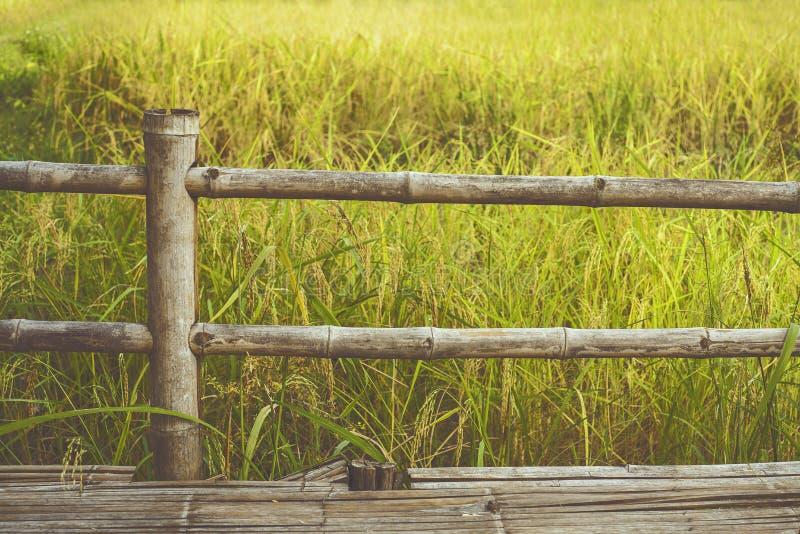 Recinzione del bambù e risaie/foto del fondo: fotografia di stile del film immagini stock libere da diritti