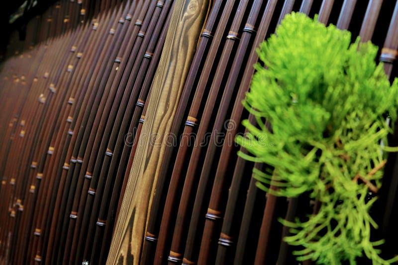 Recinzione di bambù della parete del fondo immagine stock libera da diritti