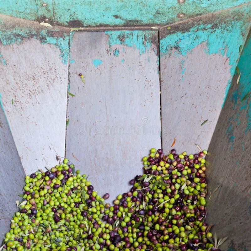 Recipiente de aço do alimentador do moinho verde-oliva fotografia de stock